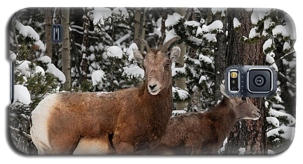 Bighorn Sheep In Deep Snow Galaxy S5 Case