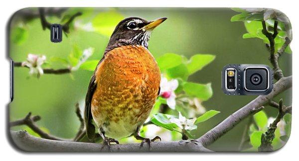 Birds - American Robin - Nature's Alarm Clock Galaxy S5 Case
