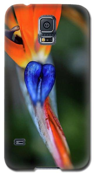 Birds Of Paradise Up Close Galaxy S5 Case