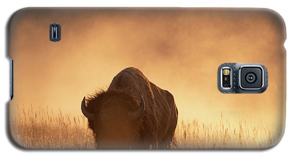 Bison In The Dust 2 Galaxy S5 Case