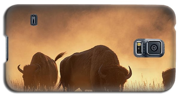 Bison In The Dust Galaxy S5 Case