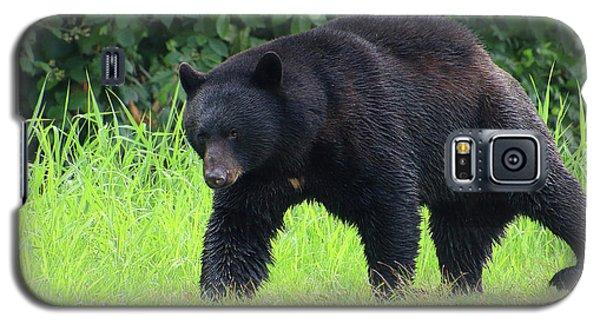 Black Bear Crossing Galaxy S5 Case