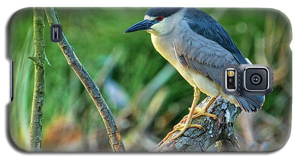 Black Crowned Night Heron Galaxy S5 Case