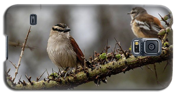Black-crowned Tchagra And White-browed Scrub-robin Galaxy S5 Case