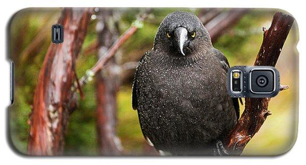 Black Currawong Galaxy S5 Case