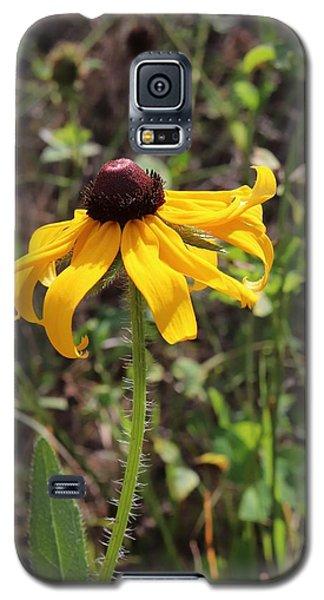 Black-eyed Susan  Galaxy S5 Case