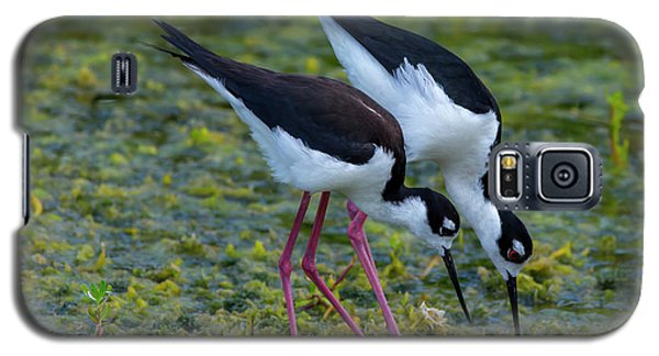 Black-necked Stilts Galaxy S5 Case