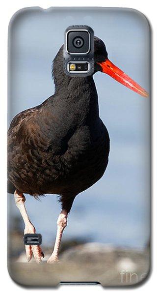 Black Oystercatcher Beachside Galaxy S5 Case