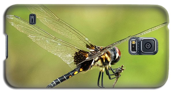Black Saddlebags Dragonfly Galaxy S5 Case