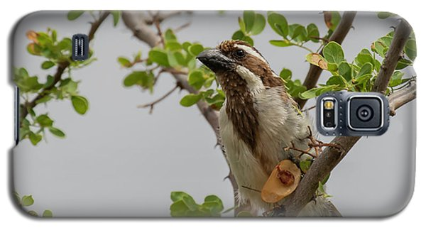 Black-throated Barbet Galaxy S5 Case