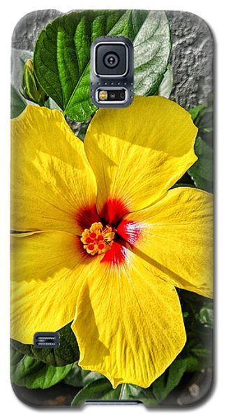 Bloom And Shine Galaxy S5 Case
