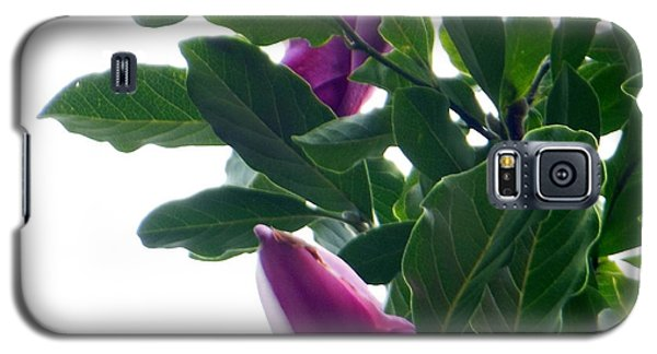 Galaxy S5 Case featuring the photograph Blossoming Magnolias by Rockin Docks