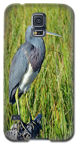 Blue Heron At Attention Galaxy S5 Case