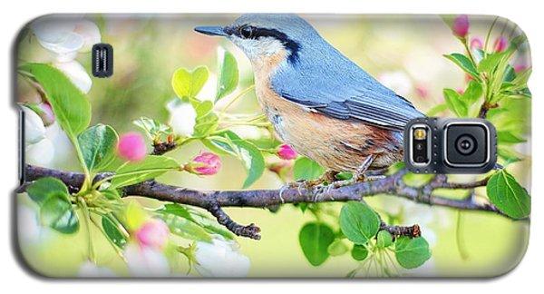 Blue Orange Bird Galaxy S5 Case