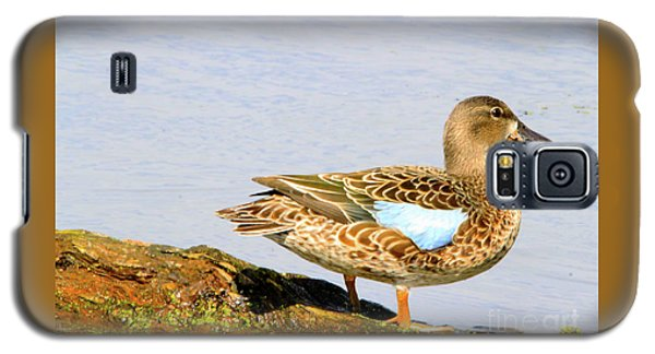 Blue-winged Teal Female Duck Galaxy S5 Case