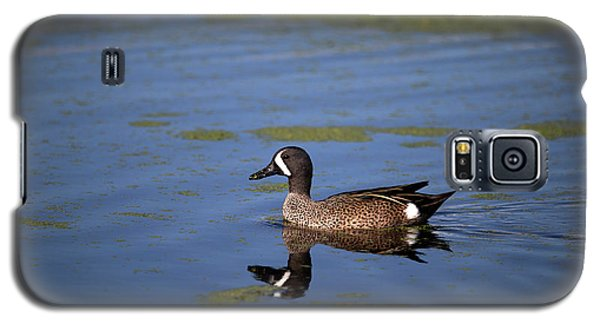 Blue Winged Teal Galaxy S5 Case