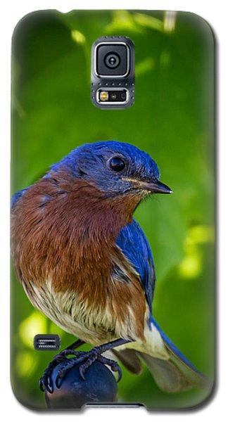 Bluebird Galaxy S5 Case