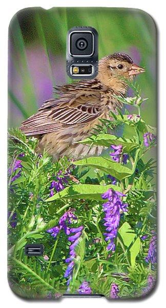 Bobolink Galaxy S5 Case