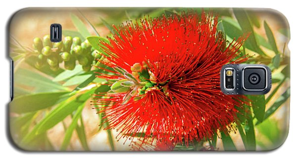 Bottlebrush Bloom Galaxy S5 Case