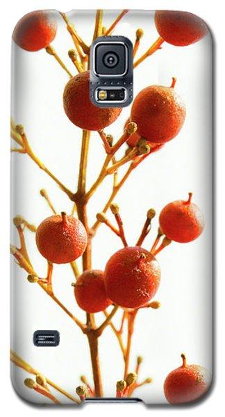 Brazilian Pepper 0482 Galaxy S5 Case