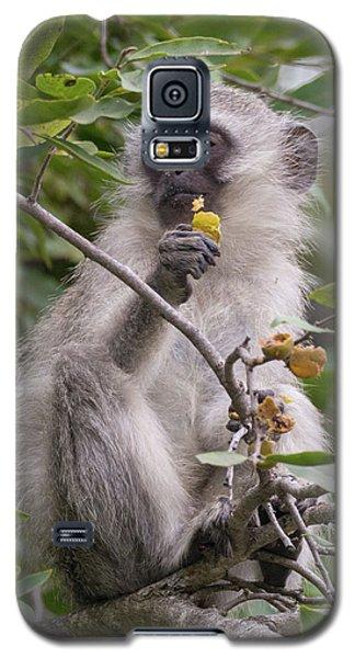 Breakfasting Monkey Galaxy S5 Case