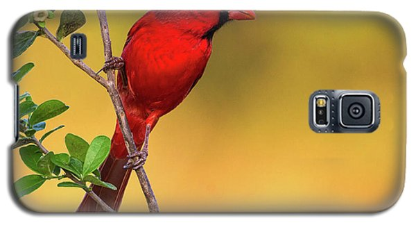 Bright Red Cardinal Galaxy S5 Case