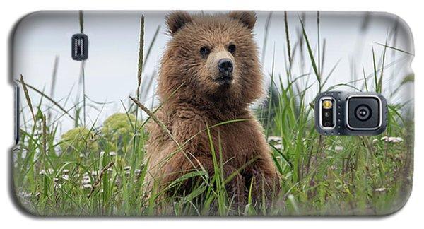 Brown Bear Cub In A Meadow Galaxy S5 Case