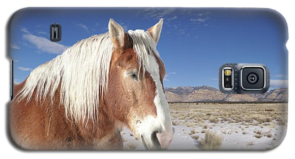 Brown Horse  Galaxy S5 Case