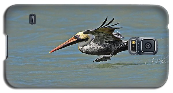 Brown Pelican Gliding Galaxy S5 Case