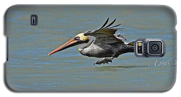 Brown Pelican Gliding Galaxy S5 Case