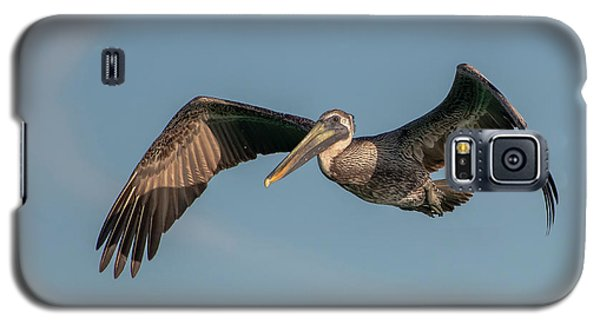 Brown Pelican In Flight Galaxy S5 Case