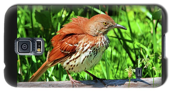 Brown Thrasher Galaxy S5 Case