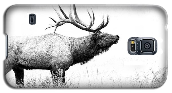 Bull Elk In Rut Galaxy S5 Case