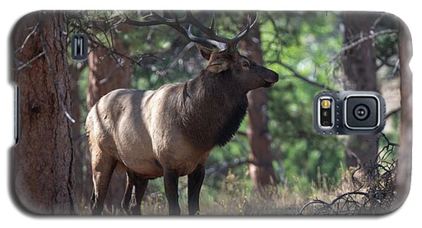 Bull Elk Galaxy S5 Case