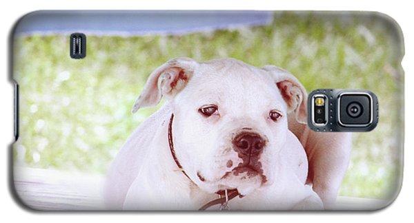 Bulldog Rana Art 80 Galaxy S5 Case