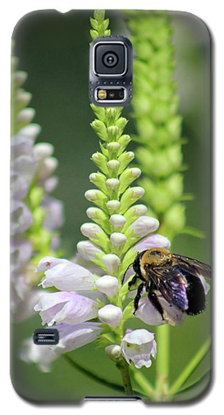 Bumblebee On Obedient Flower Galaxy S5 Case