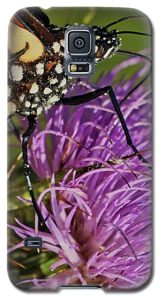 Butterfly Closeup Vertical Galaxy S5 Case