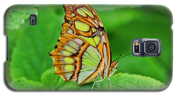 Butterfly Leaf Galaxy S5 Case