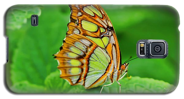 Butterfly Leaf Galaxy S5 Case
