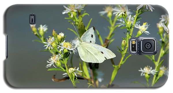Cabbage White Butterfly On Flowers Galaxy S5 Case