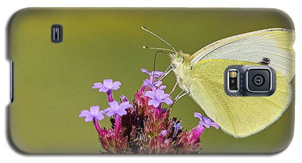 Cabbage White Butterfly Galaxy S5 Case