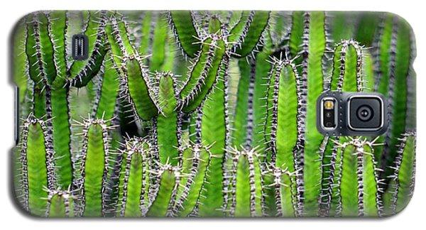 Cacti Wall Galaxy S5 Case
