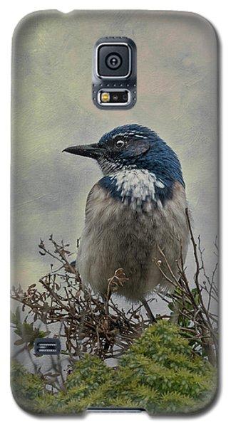 California Scrub Jay - Vertical Galaxy S5 Case