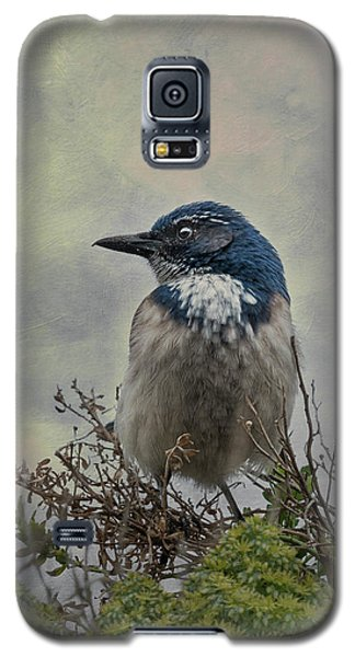 California Scrub Jay - Vertical Galaxy S5 Case