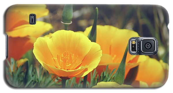 Californian Poppies In The Patagonia Galaxy S5 Case