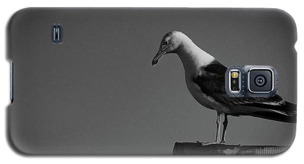 Calling Hitchcock Galaxy S5 Case