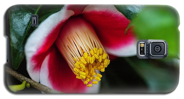 Camellia Bloom And Leaves Galaxy S5 Case