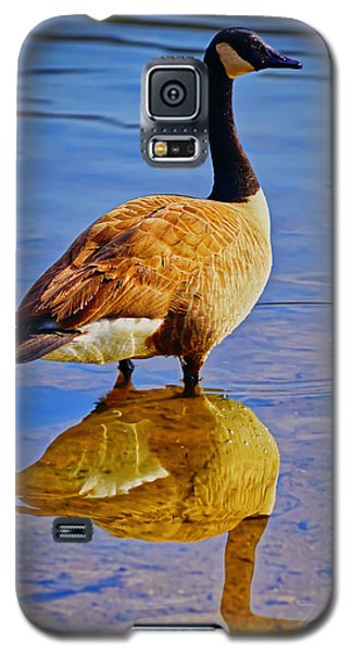 Canadian Goose Galaxy S5 Case