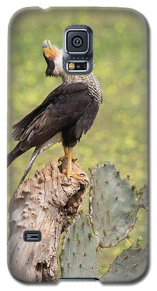 Caracara Head Throw Galaxy S5 Case