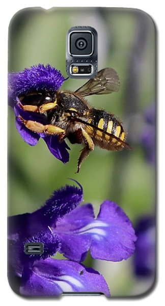 Carder Bee On Salvia Galaxy S5 Case